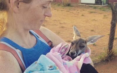 Kangaroo Dundee – A Tour with Brolga + Joey Cuddling at The Kangaroo Sanctuary in Alice Springs