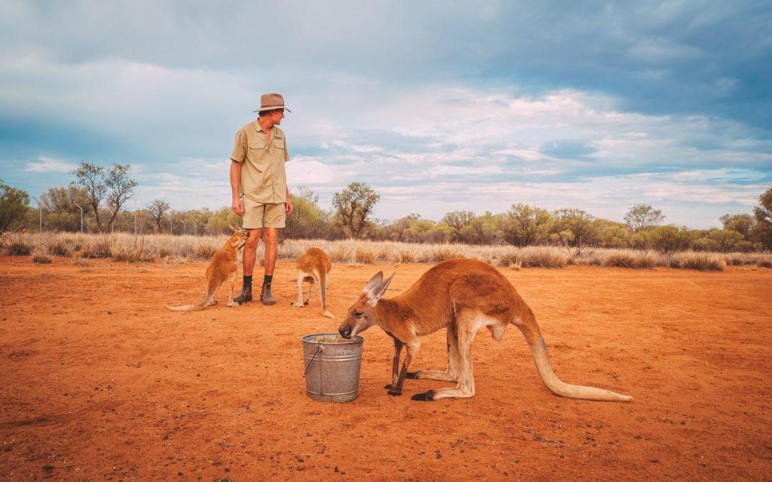 Brolga and kangaroos